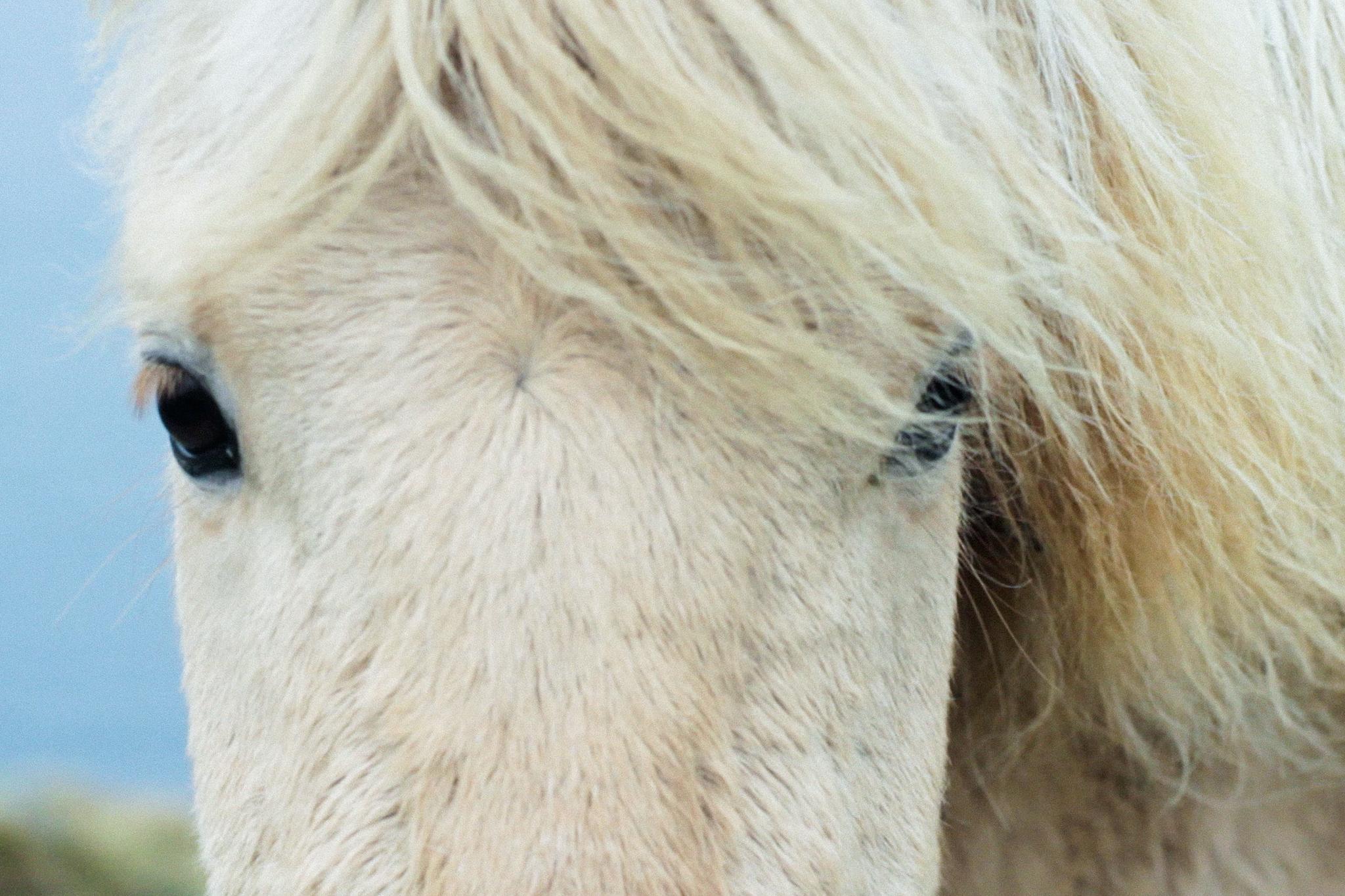 hund som ligner hest